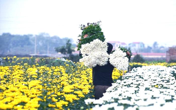 Trải Nghiệm Làng hoa Vạn Thành Đà Lạt